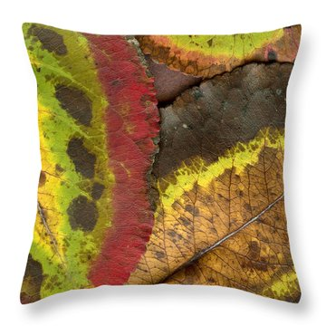 Turning Leaves 2 Throw Pillow by Stephen Anderson