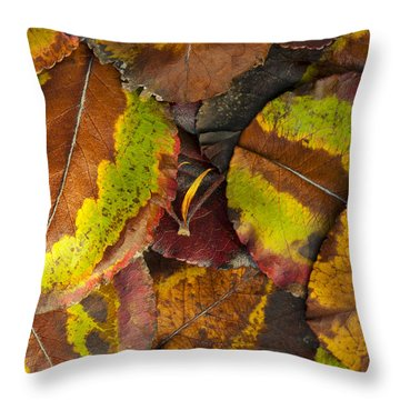 Turning Leaves 4 Throw Pillow by Stephen Anderson