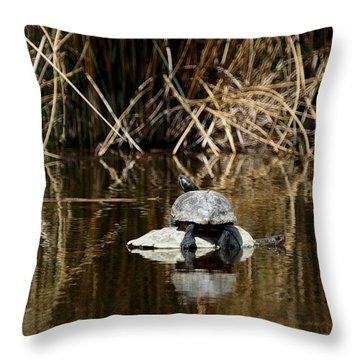 Turtle On Turtle Throw Pillow by Ernie Echols