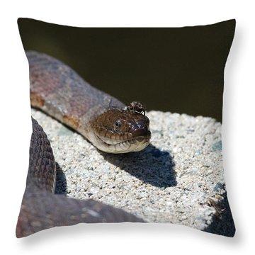 Two Creeps Throw Pillow by Karol Livote