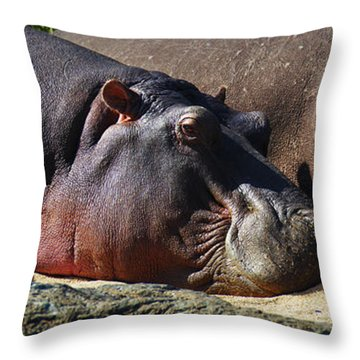 Two Hippos Sleeping On Riverbank Throw Pillow by Johan Swanepoel