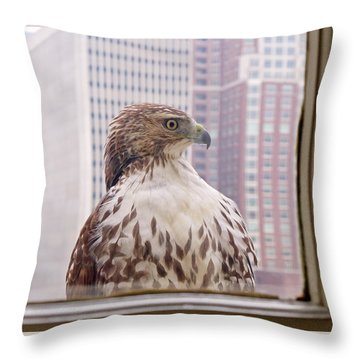 Urban Red-tailed Hawk Throw Pillow by Rona Black