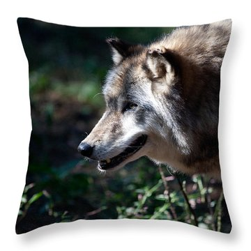 Wandering Wolf Throw Pillow by Karol Livote