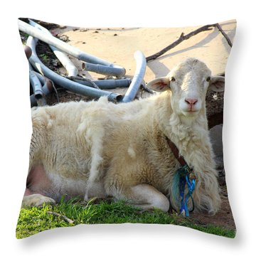 Was I Baaaad? Throw Pillow by Kathy  White