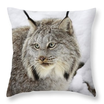 Watchful Canadian Lynx Throw Pillow by Inspired Nature Photography Fine Art Photography