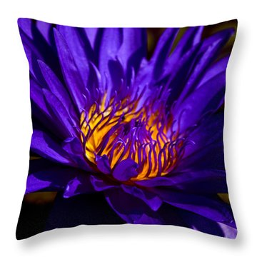Water Lily 7 Throw Pillow by Julie Palencia