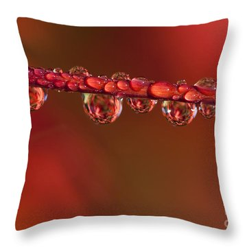 Water Line Throw Pillow by Anne Gilbert