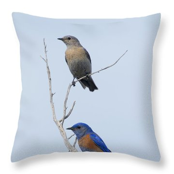 Western Bluebird Pair Throw Pillow by Mike  Dawson