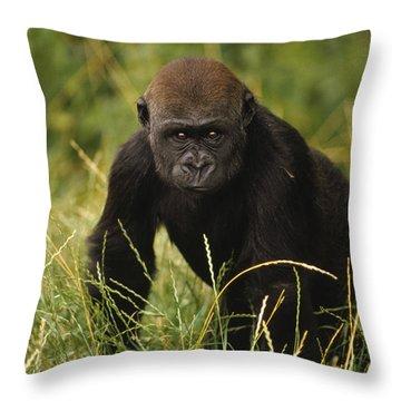 Western Lowland Gorilla Juvenile Throw Pillow by Gerry Ellis