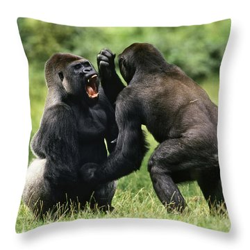 Western Lowland Gorilla Males Fighting Throw Pillow by Konrad Wothe