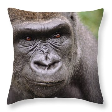 Western Lowland Gorilla Young Male Throw Pillow by Gerry Ellis