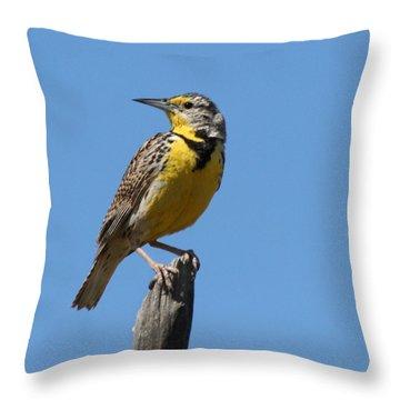Western Meadowlark Perching Throw Pillow by Bob and Jan Shriner