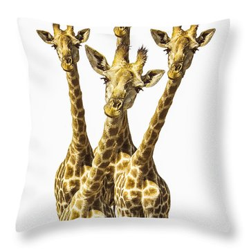 What Are You Looking At? Throw Pillow by Diane Diederich