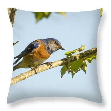 Whats Up Throw Pillow by Jean Noren