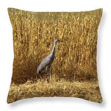 Where Is The Corn Throw Pillow by Mike  Dawson