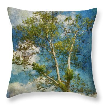 White Birch In May Throw Pillow by Lois Bryan