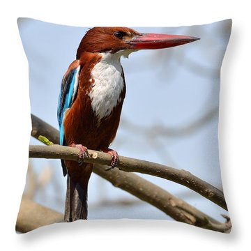 White Breasted Kingfisher Throw Pillow by Fotosas Photography