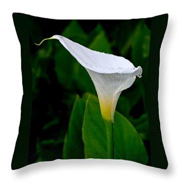 White Calla Throw Pillow by Rona Black