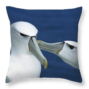 White-capped Albatrosses Courting Throw Pillow by Tui De Roy