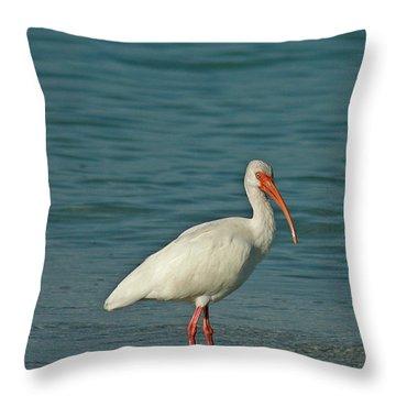 White Ibis Throw Pillow by Cindi Ressler