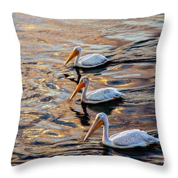White Pelicans  In Golden Water Throw Pillow by Robert Bales