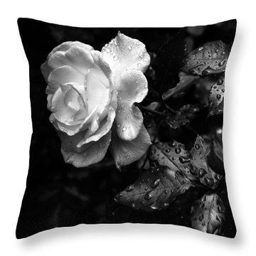 White Rose Full Bloom Throw Pillow by Darryl Dalton