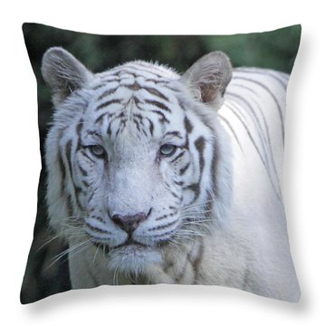 White Tiger Face Throw Pillow by Shoal Hollingsworth