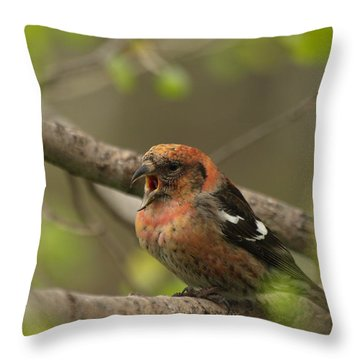 White-winged Crossbill Throw Pillow by James Peterson