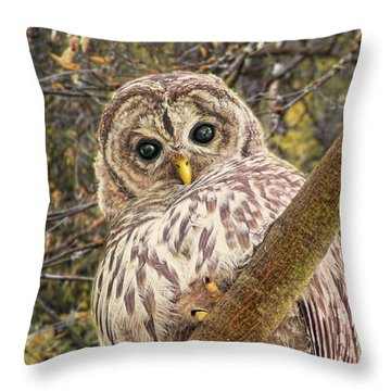 Who Who Are You Barred Owlet Throw Pillow by Jennie Marie Schell