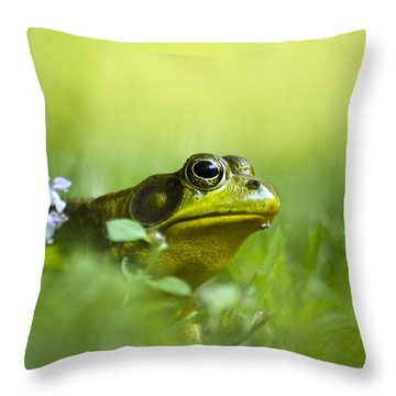 Wild Green Frog Throw Pillow by Christina Rollo