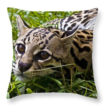 Wild Ocelot Throw Pillow by Heiko Koehrer-Wagner