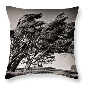 Windswept Throw Pillow by Dave Bowman