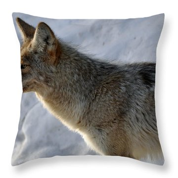 Winter Coyote In Yellowstone Throw Pillow by Bruce Gourley