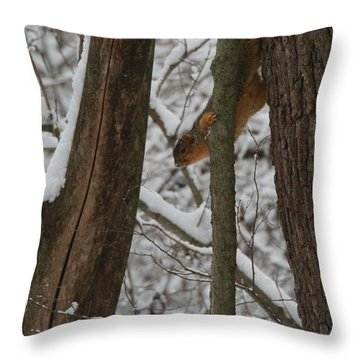 Winter Squirrel Throw Pillow by Dan Sproul