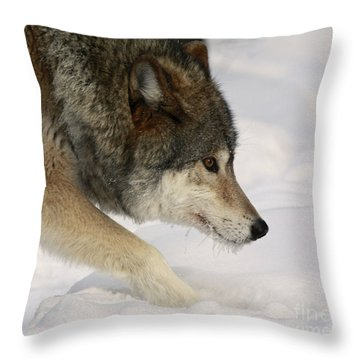 Wolf Dreams Throw Pillow by Inspired Nature Photography Fine Art Photography