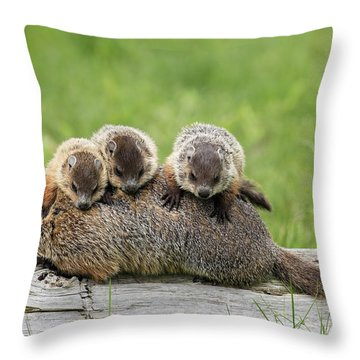 Woodchuck Carrying Young Minnesota Throw Pillow by Jurgen & Christine Sohns