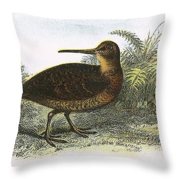 Woodcock Throw Pillow by English School