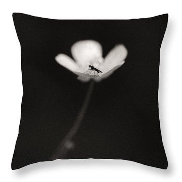 Woodland - Study 1 Throw Pillow by Dave Bowman