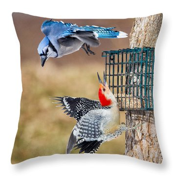Woodpeckers And Blue Jays Square Throw Pillow by Bill Wakeley