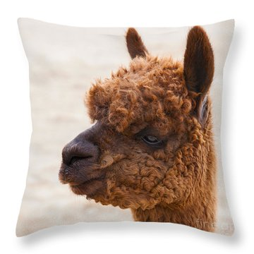 Woolly Alpaca Throw Pillow by Jerry Cowart