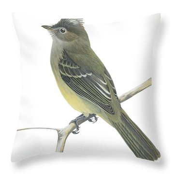Yellow Bellied Elaenia  Throw Pillow by Anonymous