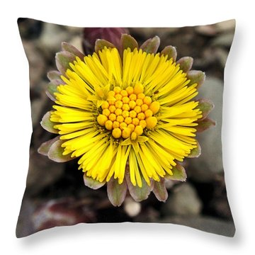 Yellow Coltsfoot Flower Throw Pillow by Christina Rollo