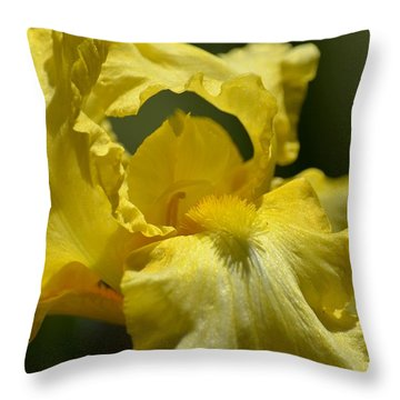 Yellow Iris Swirl Throw Pillow by Maria Urso
