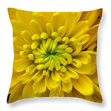 Yellow Mum Throw Pillow by Garry Gay