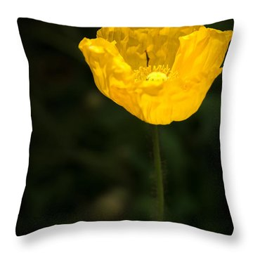 Yellow Poppy Throw Pillow by  Onyonet  Photo Studios