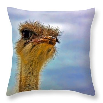 You Talkin To Me Throw Pillow by Gary Holmes