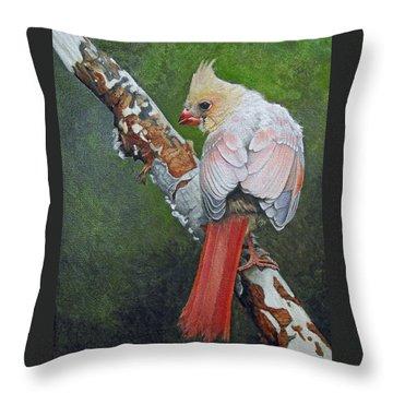 Young Cardinal  Throw Pillow by Ken Everett