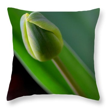 Young Tulip Throw Pillow by Lisa Phillips