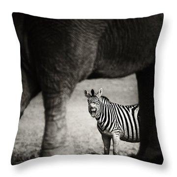 Zebra Barking Throw Pillow by Johan Swanepoel
