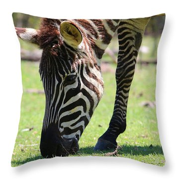 Zebra Throw Pillow by Ester  Rogers